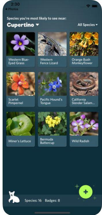 Seek by iNaturalist İndir - iOS İçin Doğayı Tanıma
