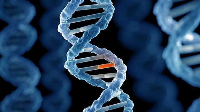 Genetiği Değiştirilmiş Sivrisinek 2