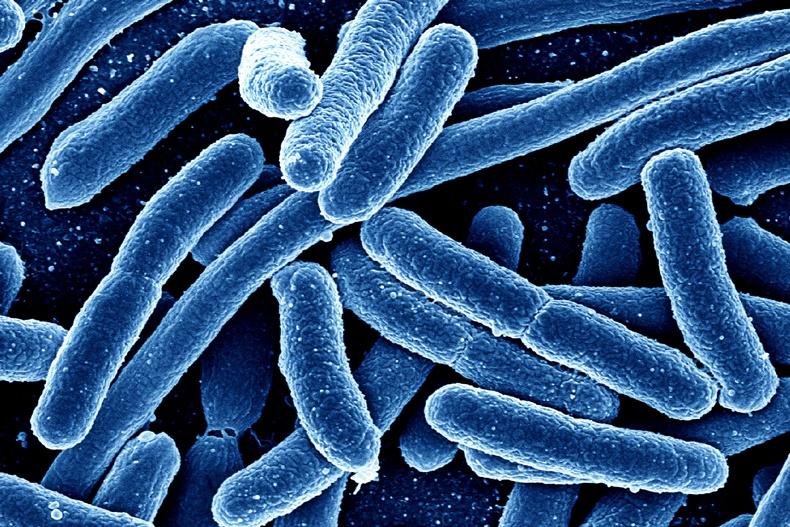 Mars bakteri