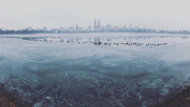 Burcu Öztürk, Frozen Central Park