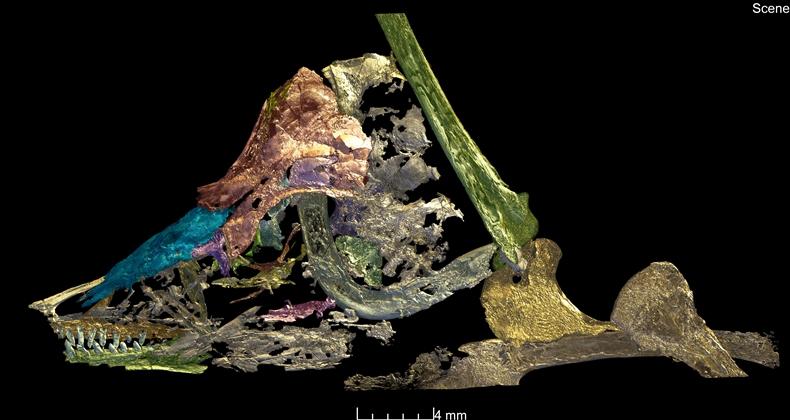 Archaeopteryx-2