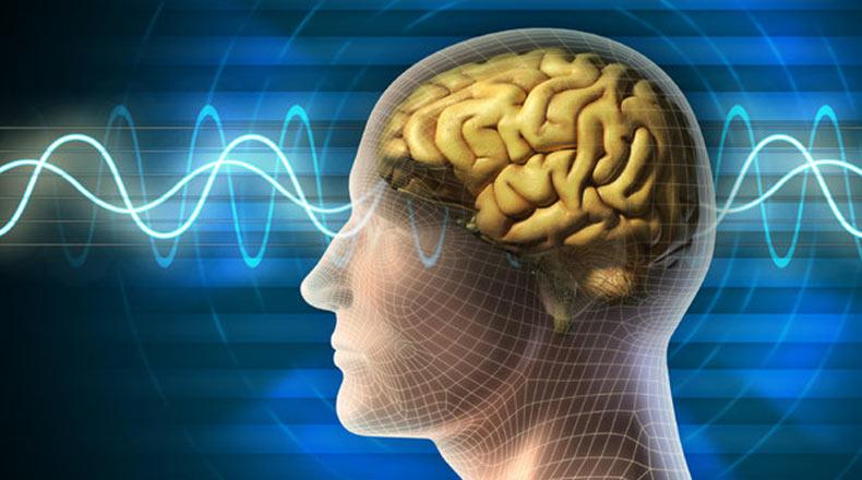 Beyin Gelişimi IQ Artışı 3