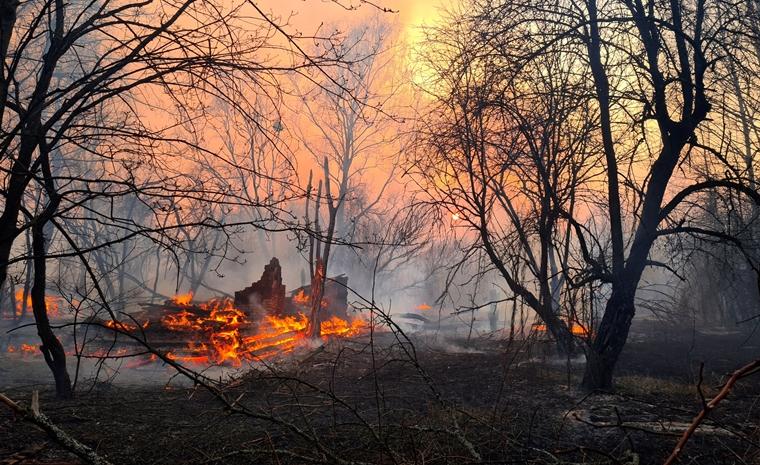 çernobil orman yangını ukrayna