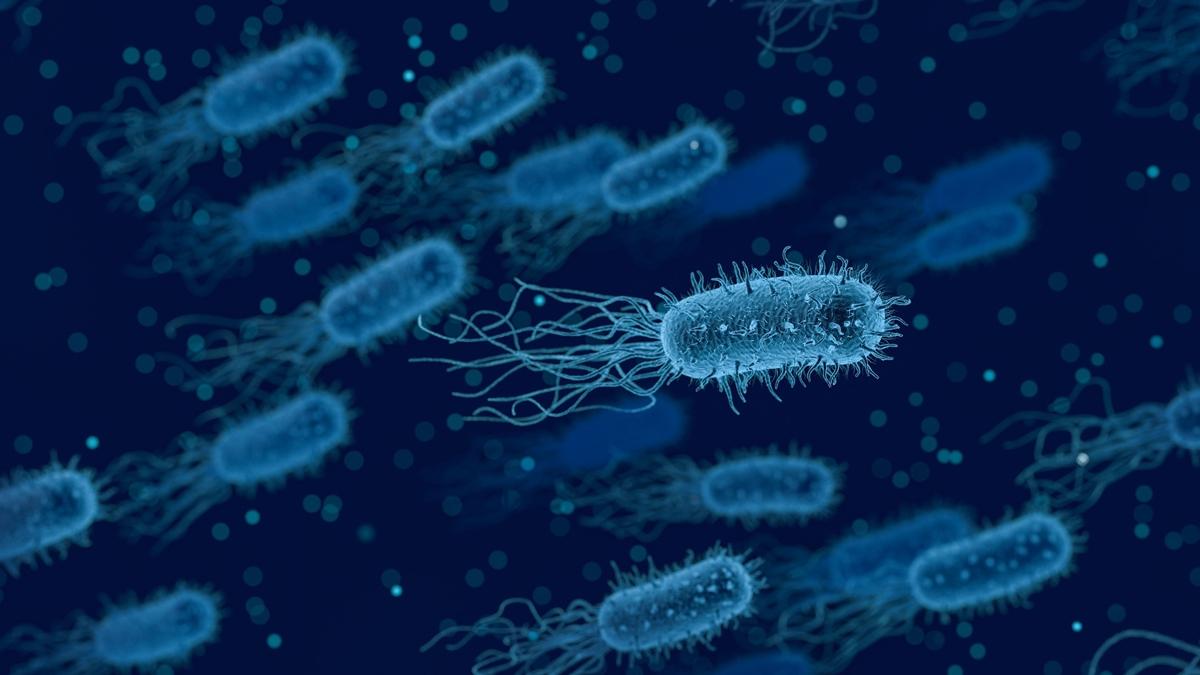 olumcul-bakteri-yayilmaya-basladi