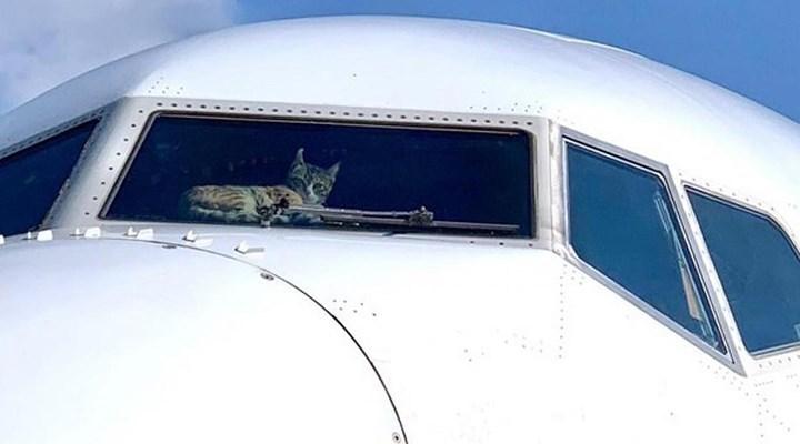 gizlice-ucaga-giren-kedi-pilota-saldirdi