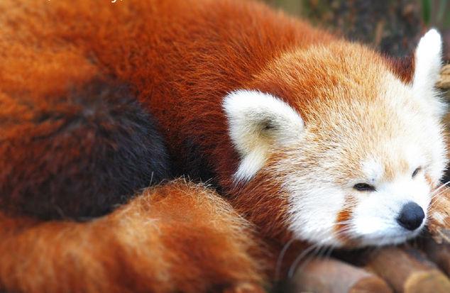 Firefoxy Tasarım Anlayışı