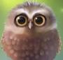 Little Owl Lite