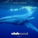 Whale Sounds