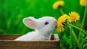 Tavşanlar Hakkında Bilgiler