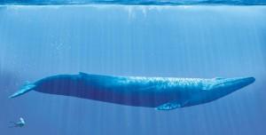 Mavi Balina Oyunu Bir Can Daha Aldı!