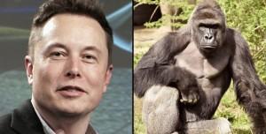 Elon Musk Şimdi de Rapçi Oldu! İlk Şarkısını Yayınladı
