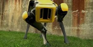 Robot Köpek Spot Çoban Olarak Karşımıza Çıktı!