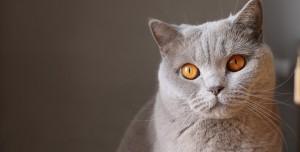 Evcil Hayvanlardan Koronavirüs Bulaşıyor Mu? İşte Açıklama
