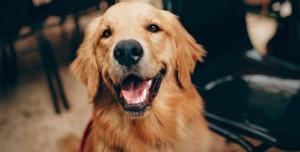 Instagram'ın En Popüler Köpek Hesapları