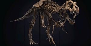 67 Milyon Yıllık Dinozor İskeleti Rekor Fiyata Satıldı!