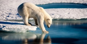Buzullarda Petrol Arama Projesi Reddedildi: Şimdi Ne Olacak?