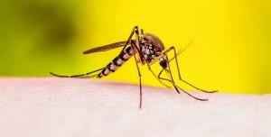Sivrisineğin Koku Duyusundan Kanser Dedektörü Geliştirdiler
