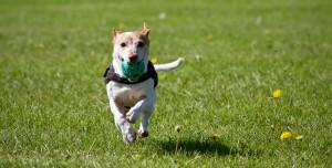 Yapay Zeka Artık Köpek Eğitmek İçin Kullanılacak!