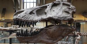 Dinozorların Neden Çok Büyük Olduğu Ortaya Çıktı