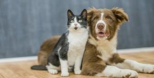 Hayvan Sahipleri Dikkat: Evcil Hayvanlara Çip Takılacak