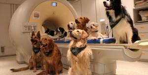 Köpeklerin Vücut Farkındalığı Olduğu Tespit Edildi