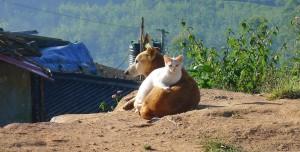 Kediler ve Köpekler Karantinaya Alınacak