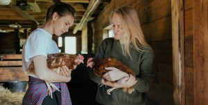 Kuş Gribinin H5N8 Türü İlk Kez İnsanlara Bulaştı!