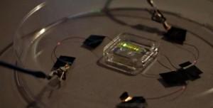 Işıklı Elektronik Dövme Geliştirildi