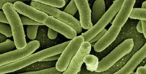 Türkiye'de 2 Yeni Bakteri Türü Keşfedildi: İşte İsimleri!