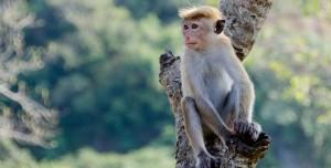 Maymunlar Cehennemi Gerçek Oldu: Kaçmaya Çalıştılar!