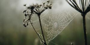 Bilim İnsanları, Örümcek Ağından Müzik Yaptı!