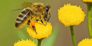Fanta Kapağını Açmak İçin Birlikte Çalışan Arılar Görenleri Şaşırttı!