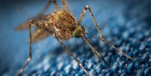 Genetiği Değiştirilmiş Sivrisinekler ABD'ye Salındı