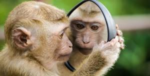 Hasta Maymunlar Sosyal Mesafe Kuralına Uyuyor!