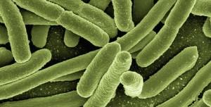 Bilim İnsanları, Küresel Bakteri Haritası Geliştirdi!
