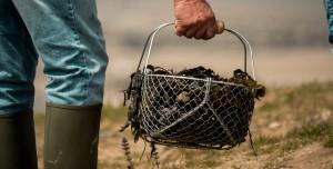 Kanada'nın Ölümcül Sıcak Dalgası Deniz Canlılarını Haşladı