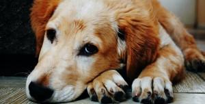 İnsanın En Sadık Dostu Köpeğin Paylaşımcı Olmadığı Ortaya çıktı