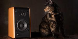 Son Ses Müzik Dinleyen Kediye Polis Baskını!