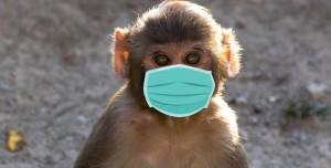 Maske Takan Maymun Sosyal Medyanın Gündemine Oturdu (Video)