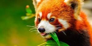 Firefox Portable Nasıl Türkçe Yapılır?