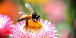 Arılar Teması