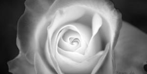 Floral Geometri Teması