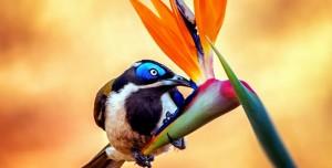 Kuşların Gökküşağı Teması