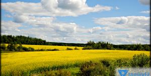 Manitoba Gezisi Teması