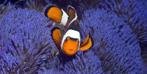 Tropikal Balık Teması