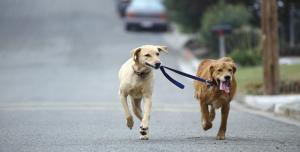 Evcil Hayvan Sahiplerinin Kullanabileceği 8 Android Uygulaması