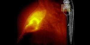 Tek Hücreli Canlıları Detaylı Olarak İnceleyebilen En Güçlü Mikroskop