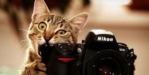 İyi Bir Fotoğrafçı Olmak İçin 2  Ana Başlık Altında 13 Altın İpucu