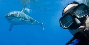Selfie Çekerken Ölenlerin Sayısı Köpekbalıklarına Kurban Gidenlerden Fazla