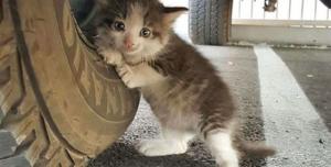 Reddit'ten Poz Veren Yavru Kedi Photoshop Yarışması